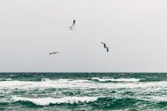 Zeemeeuwen over het overzees op een bewolkte dag royalty-vrije stock foto