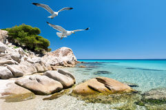 Zeemeeuwen over overzeese kust stock fotografie
