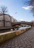 Zeemeeuwen in Parijs Royalty-vrije Stock Afbeeldingen