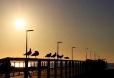Zeemeeuwen in Silhouet op een Houten Pier Stock Foto