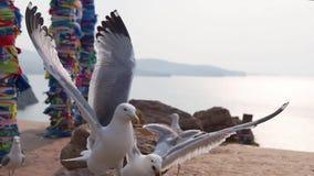 Zeemeeuwen tegen shamanic kolommen stock video