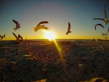 Zeemeeuwen tegen zonsondergang Royalty-vrije Stock Afbeeldingen