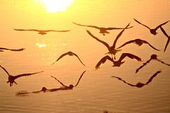 Zeemeeuwen tijdens de vlucht Royalty-vrije Stock Fotografie