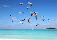 Zeemeeuwen tijdens de vlucht Royalty-vrije Stock Foto's