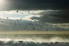 Zeemeeuwen tussen hemel en oceaan Royalty-vrije Stock Foto