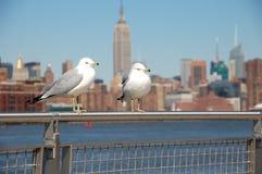 Zeemeeuwen van New York Royalty-vrije Stock Fotografie