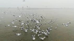 Zeemeeuwenmigratie bij toeristische attracties in Thailand stock video