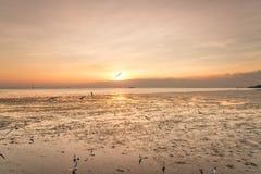 Zeemeeuwensilhouetten tijdens de vlucht bij zonsopgang Stock Foto