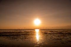 Zeemeeuwensilhouetten tijdens de vlucht op zonsopgang Royalty-vrije Stock Fotografie