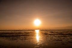 Zeemeeuwensilhouetten tijdens de vlucht op zonsopgang Stock Fotografie