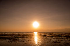 Zeemeeuwensilhouetten tijdens de vlucht op zonsopgang Royalty-vrije Stock Foto's