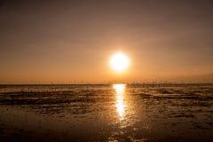 Zeemeeuwensilhouetten tijdens de vlucht op zonsopgang Royalty-vrije Stock Afbeeldingen