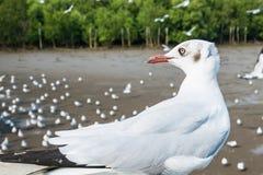 Zeemeeuwenvogel bij het overzees Bangpu Samutprakarn Thailand royalty-vrije stock foto's