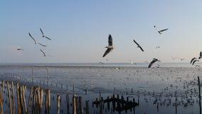 ZEEMEEUWENvogel EN BLAUWE HEMEL Stock Afbeelding