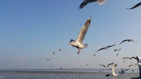 ZEEMEEUWENvogel EN BLAUWE HEMEL Stock Fotografie