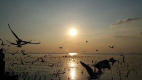 ZEEMEEUWENvogel EN DE ZONSONDERGANG Stock Foto