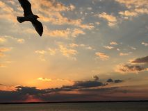 Zeemeeuwsihouette bij zonsondergang Royalty-vrije Stock Afbeeldingen