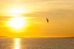 Zeemeeuwsilhouet boven het overzees bij kleurrijke zonsondergang Idee van harmonie en kalmte stock foto