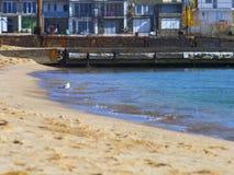 Zeemeeuwtribunes in het water op strand stock foto's