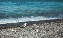 Zeemeeuwtribunes op het strand stock fotografie