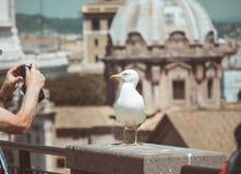 Zeemeeuwtribunes over de daken in historisch centrum van Rome royalty-vrije stock afbeeldingen
