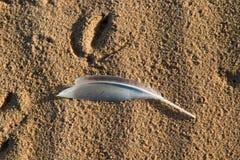 Zeemeeuwveer op het zand van een strand Royalty-vrije Stock Foto's