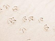 Zeemeeuwvoetafdrukken op zand Royalty-vrije Stock Afbeeldingen