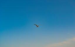 Zeemeeuwvogel die in de hemel vliegen Royalty-vrije Stock Foto
