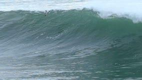 Zeemeeuwvogel die over een Grote Oceaangolf vliegt stock footage