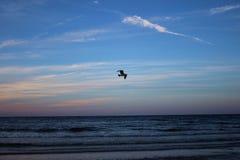 Zeemeeuwvogel die voorbij de het toenemen zon vliegen Royalty-vrije Stock Fotografie