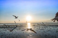 Zeemeeuwvogel met hemel en overzees op zonsondergangtijd Royalty-vrije Stock Foto's