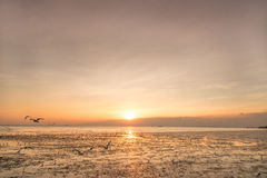 Zeemeeuwvogel met hemel en overzees op zonsondergangtijd Royalty-vrije Stock Afbeelding
