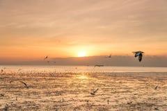 Zeemeeuwvogel met hemel en overzees op zonsondergangtijd Royalty-vrije Stock Foto