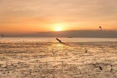 Zeemeeuwvogel met hemel en overzees op zonsondergangtijd Stock Afbeeldingen