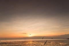 Zeemeeuwvogel met hemel en overzees op zonsondergangtijd Stock Foto's