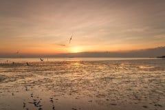 Zeemeeuwvogel met hemel en overzees op zonsondergangtijd Stock Fotografie