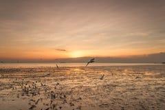 Zeemeeuwvogel met hemel en overzees op zonsondergangtijd Stock Foto