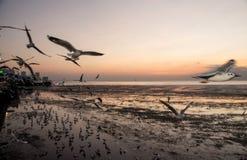 Zeemeeuwvogel met hemel en overzees in zonsondergangtijd Stock Afbeeldingen