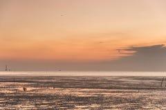 Zeemeeuwvogel met hemel en overzees in zonsondergangtijd Stock Afbeelding