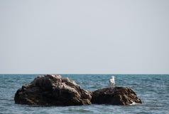 Zeemeeuwzitting op een rots door het overzees Royalty-vrije Stock Foto