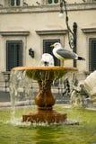 Zeemeeuwzitting op fontein voor Royalty-vrije Stock Fotografie