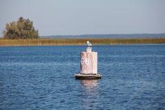 Zeemeeuwzitting op oude boei in de herfst zonnige dag Royalty-vrije Stock Foto