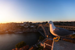 Zeemeeuwzitting tijdens zonsondergang op achtergrondbrug Dom Luis I in Porto stock afbeeldingen