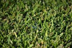 Zeepbel op het gras stock foto's