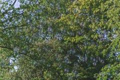 Zeepbels met Bomen op de Achtergrond Stock Afbeeldingen