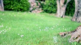 Zeepbels op gras stock video