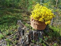 Zeer aardige houten die mand met gele bloemen wordt gevuld stock foto