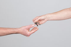 Zeer belangrijke overdracht van een vrouwenhand aan een man hand Royalty-vrije Stock Fotografie