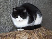 Zeer bevroren kat Stock Afbeeldingen