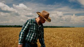Zeer droevige landbouwer op de korrelaanplanting stock video